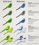 Budgerigar colour genetics by RiverRaven