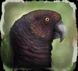 Imperial Amazon