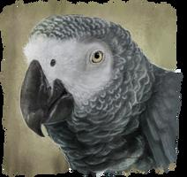 Grey parrot by RiverRaven