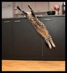 Flying Cat 1