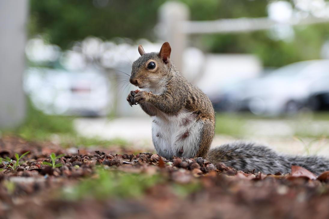 Squirrel by oceanbased