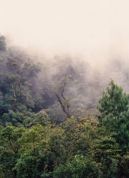 Misty day in Sierra Madre