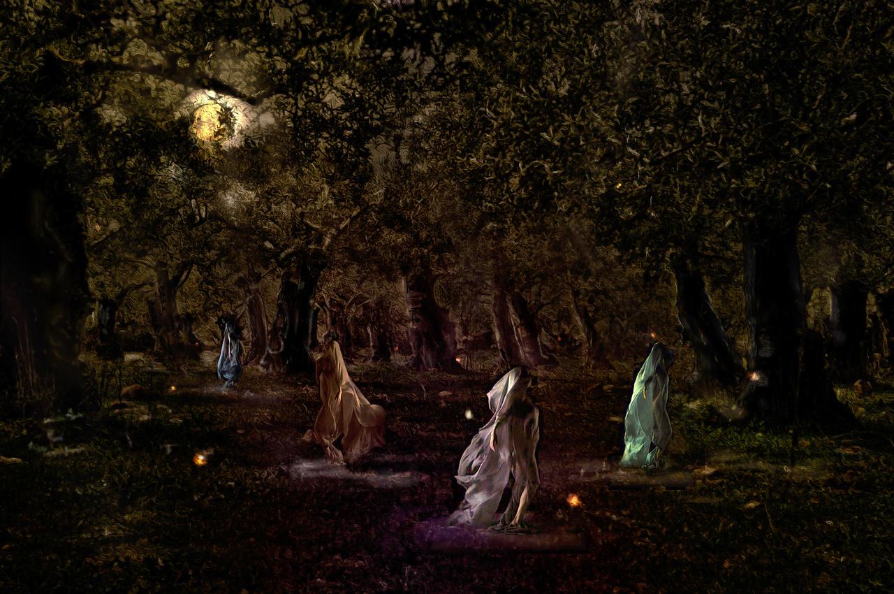 Enchanted Grove by calikal
