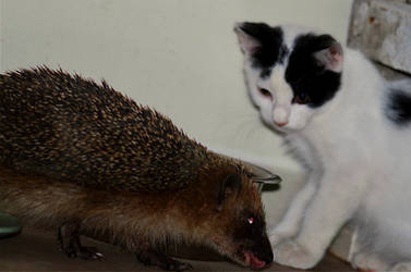 Don't mess with me cub!