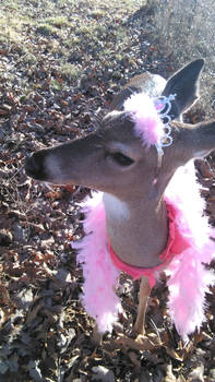 Madeleine the Deer