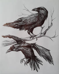 The Crows by Foxytragic