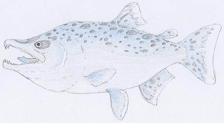 Vlo salmon