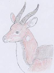 Kilp antelope