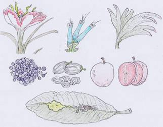 Flora of Vorran Peninsula