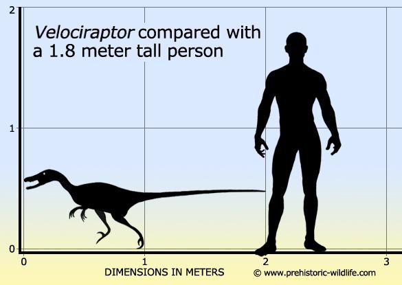 Velociraptor size chart by Scarlett-Hyde on DeviantArt