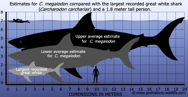 Megalodon size chart by Scarlett-Hyde on DeviantArt