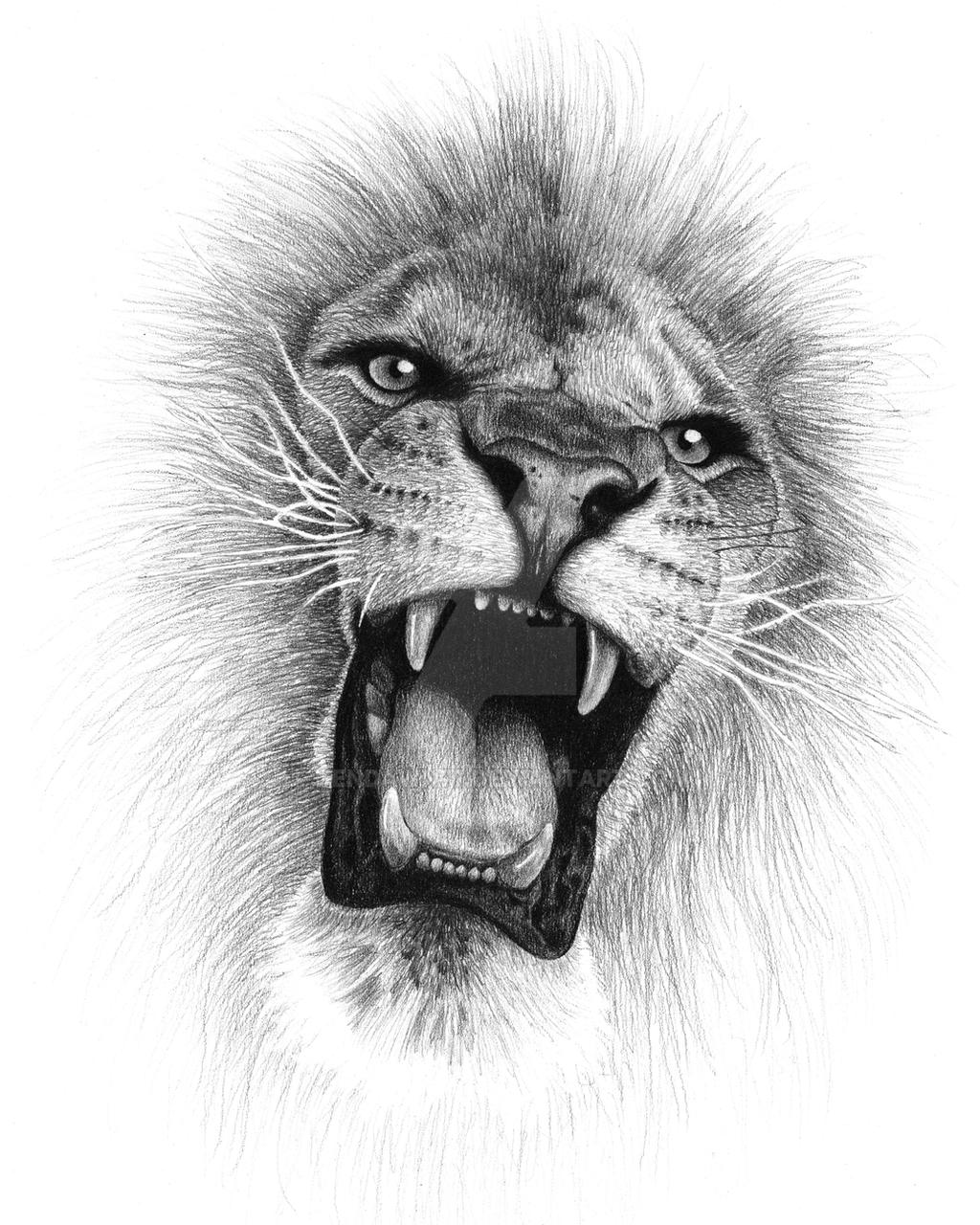 Lion Roaring Front View Drawing - photo#1