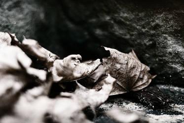 Dry and Dead by CanisLupusMoon