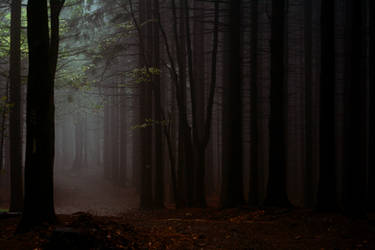 Beeches in the Mist by CanisLupusMoon