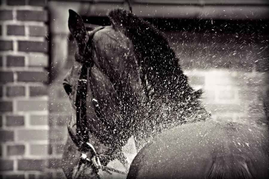 Horse Shower By CanisLupusMoon ...