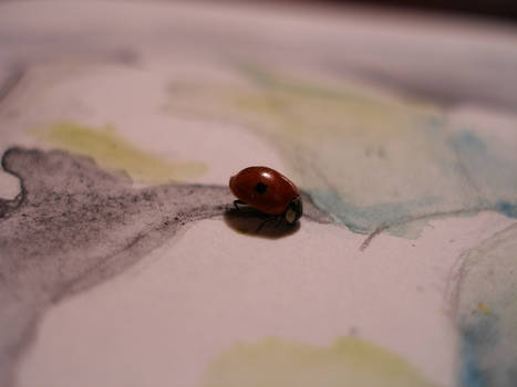 ladybird on the water color