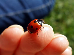 ladybird on my hand