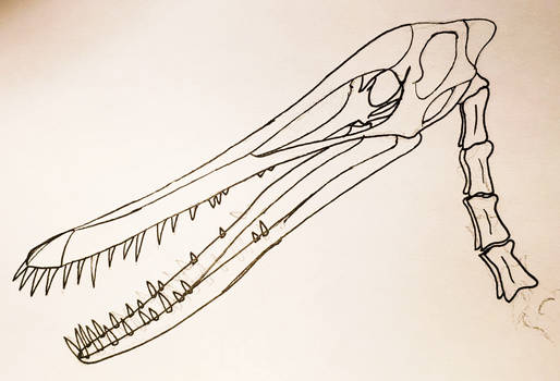 Aetodactylus skull