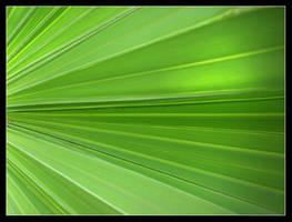 Green Pattern II by vk