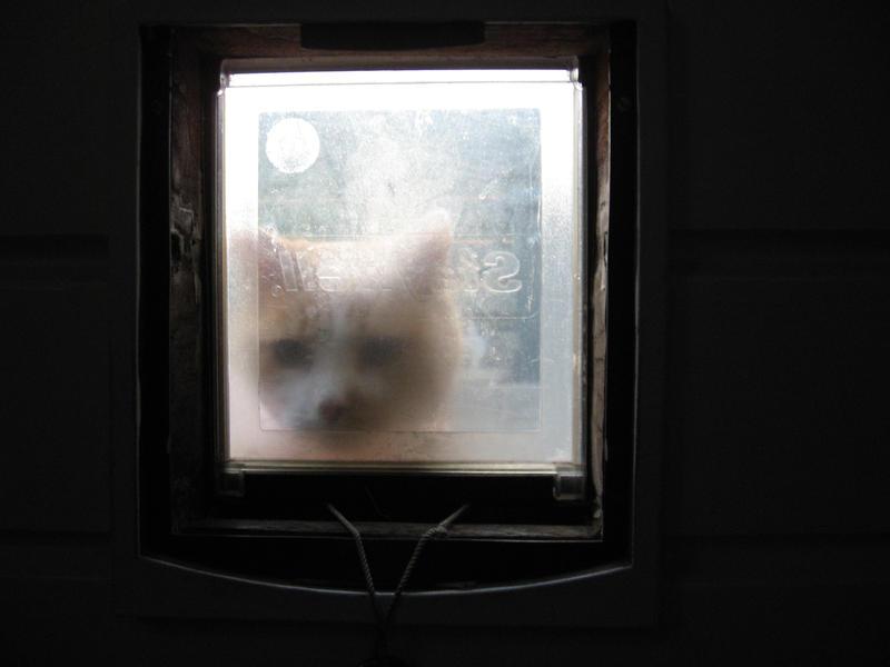 Gizmo behind catdoor by KatieCarlinHudson