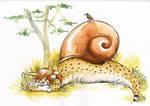 Savanah snail