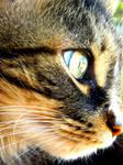 She Is My Wild Cat
