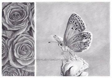 Shannon's butterfly by Liennepien