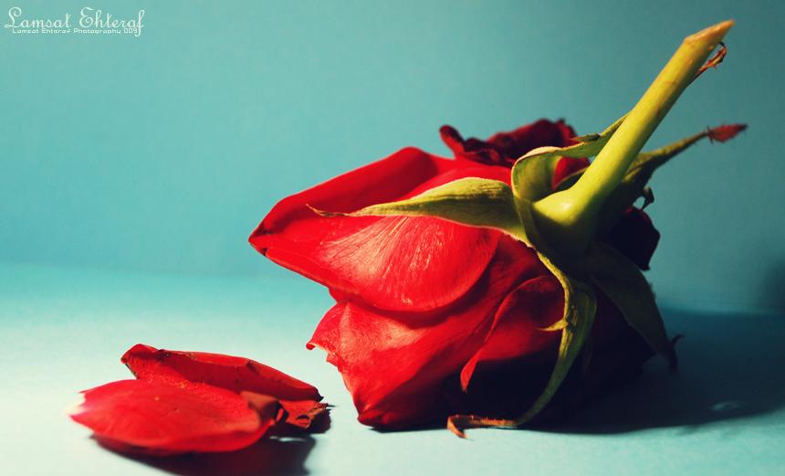 Crveno ... - Page 2 Flower_03_by_Lamsat_Ehteraf