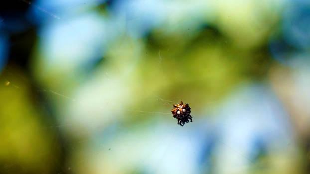 Spider WP Redux