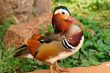 Who's a pretty duck?