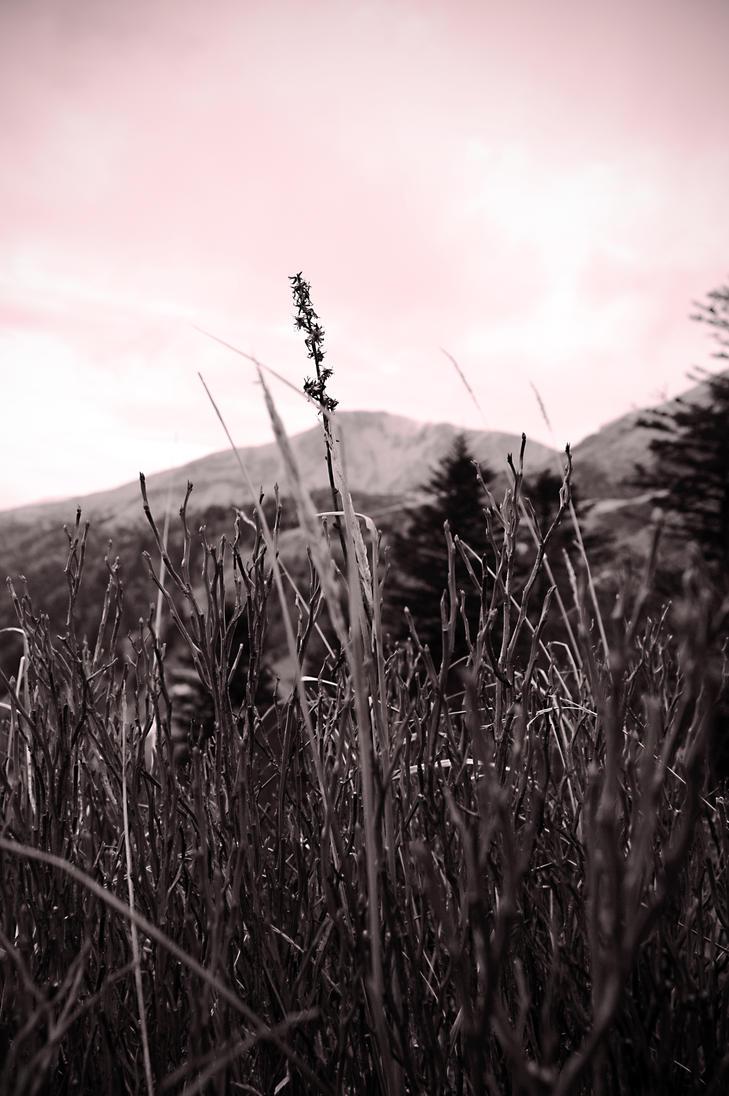 Mountain Flower by Jfboards24