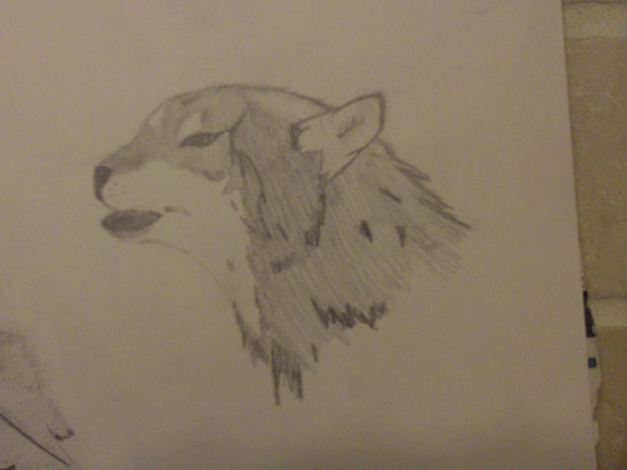 Realistic Wolf by AbyssinalPhantom