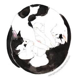 Yin + Yang by nekophoenix
