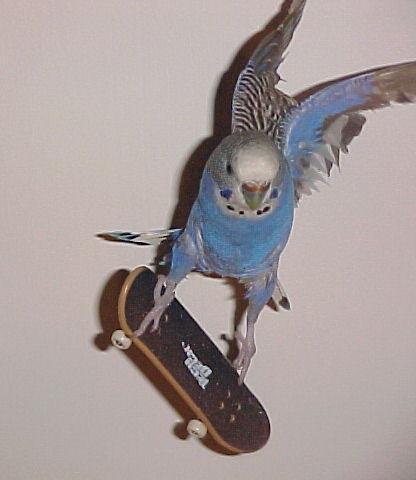 Bird by qubik - ��te Kar��n�zda S�per Ku� [Ger�ektende �yle G�r�n�yor:D]
