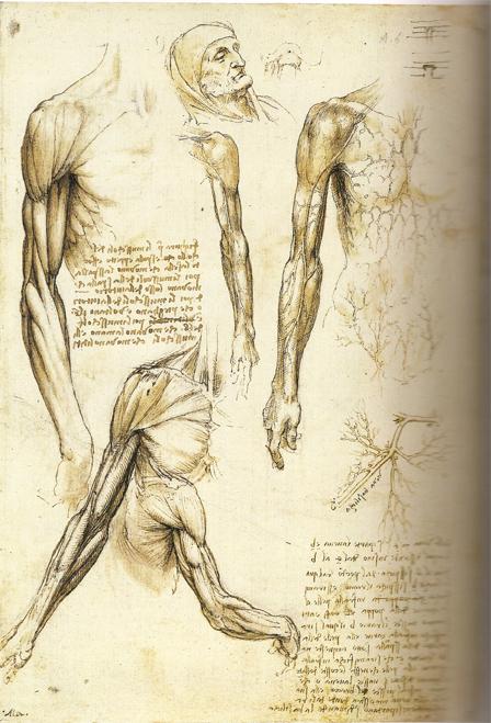 Sketching human anatomy