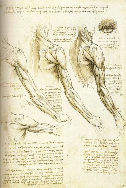 Leonardo da Vinci's Anatomical Drawings by SRaffa on ...