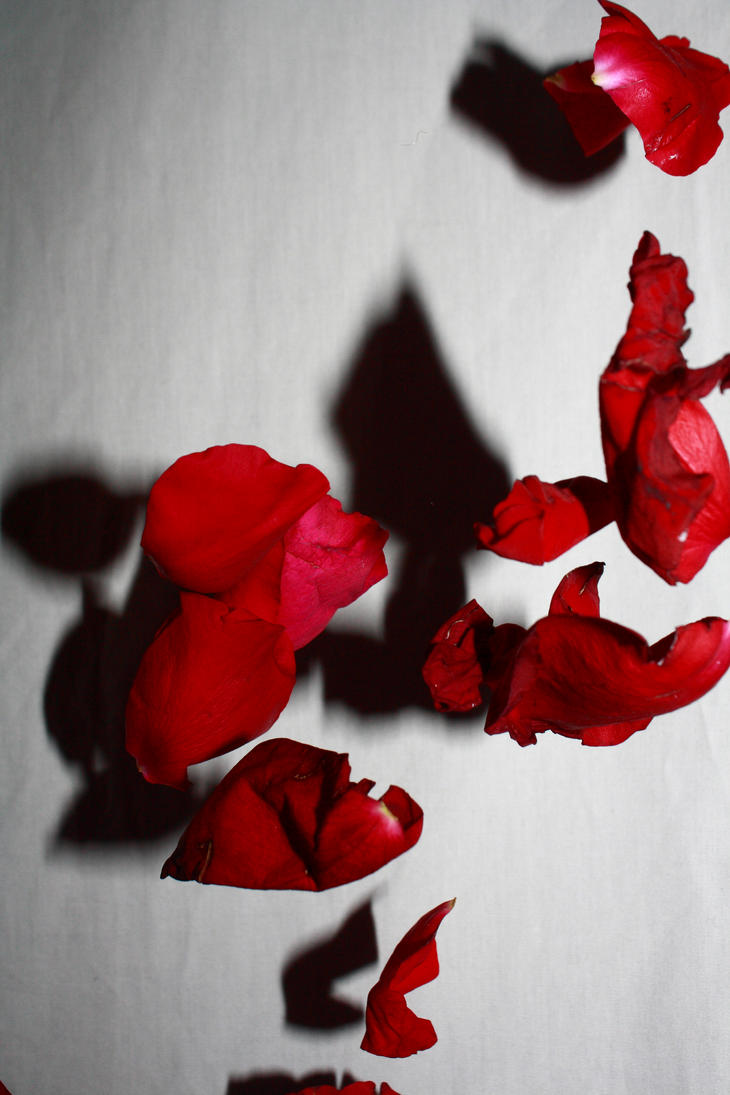 Raining Petals 0050 by Akuard-Stock