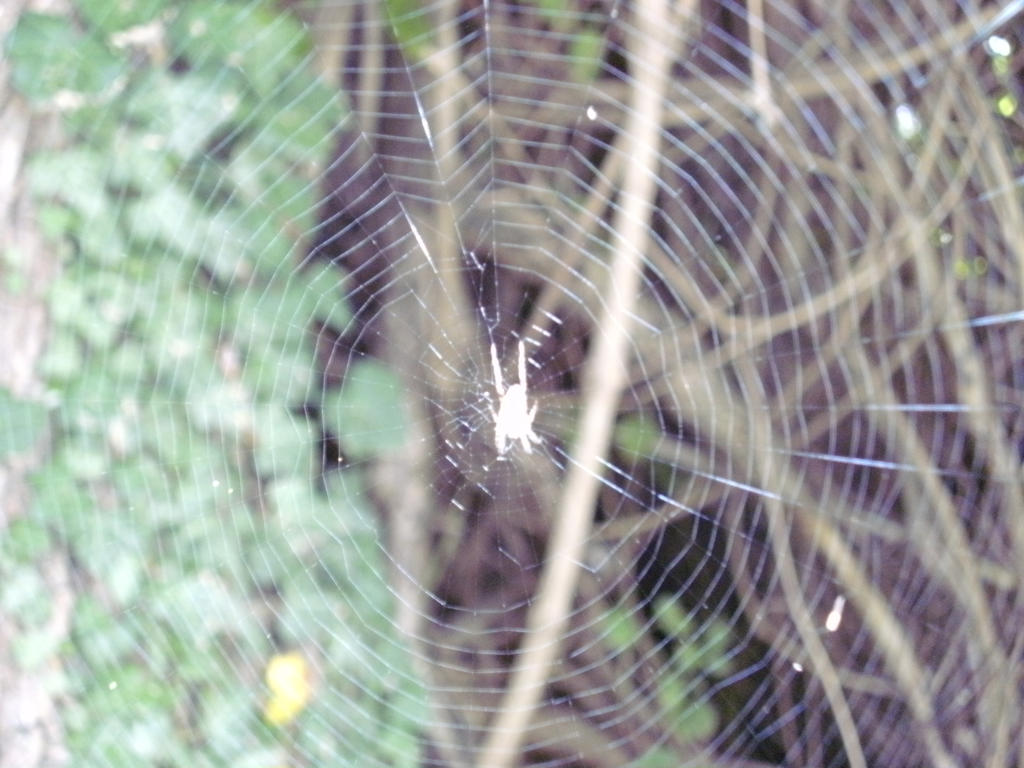 Charlotte's web. by Kazuma27