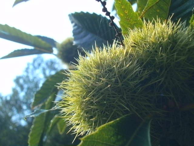 Spiky but still young. by Kazuma27