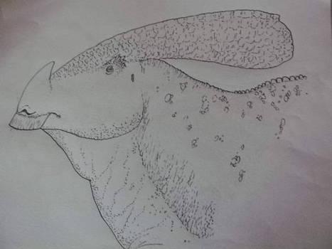 Horned water-drake