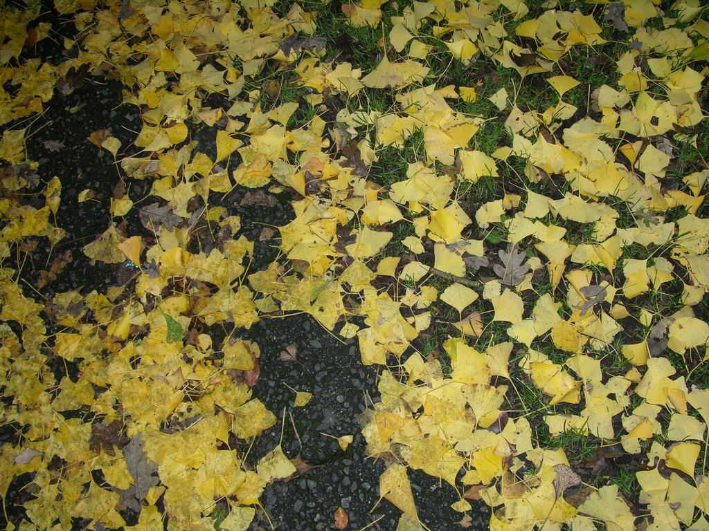 Fall by Before-I-Sleep