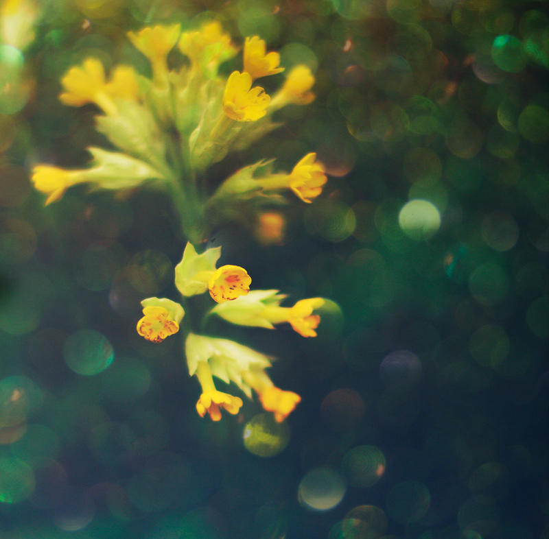 Yellow and green by Snowfall-lullaby