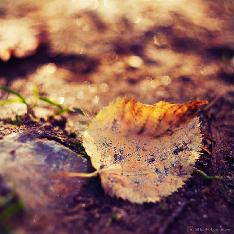 Sunny autumn by Snowfall-lullaby