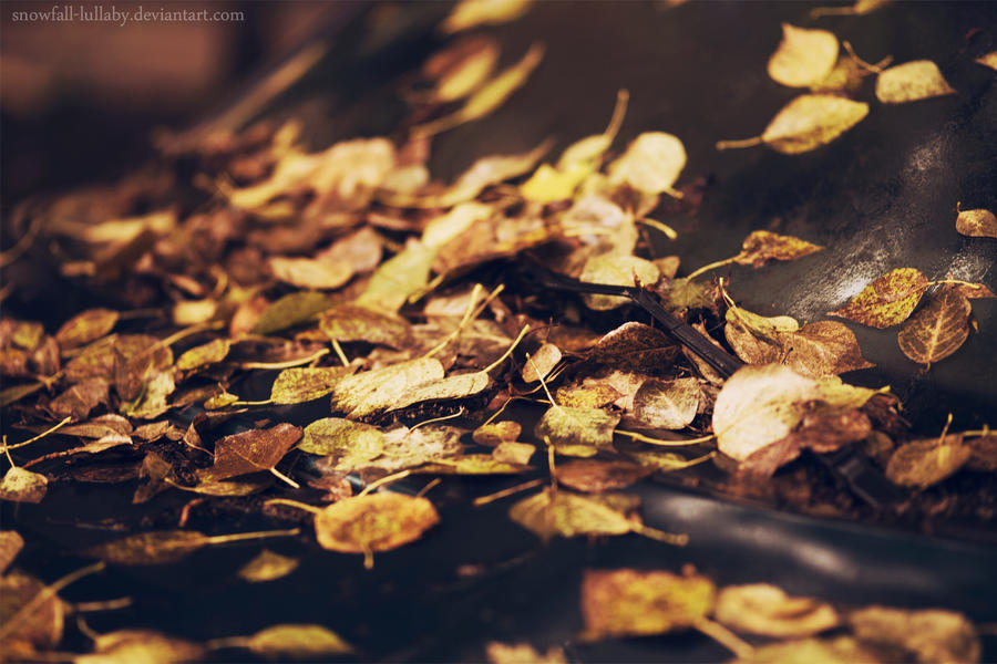 golden fall by Snowfall-lullaby