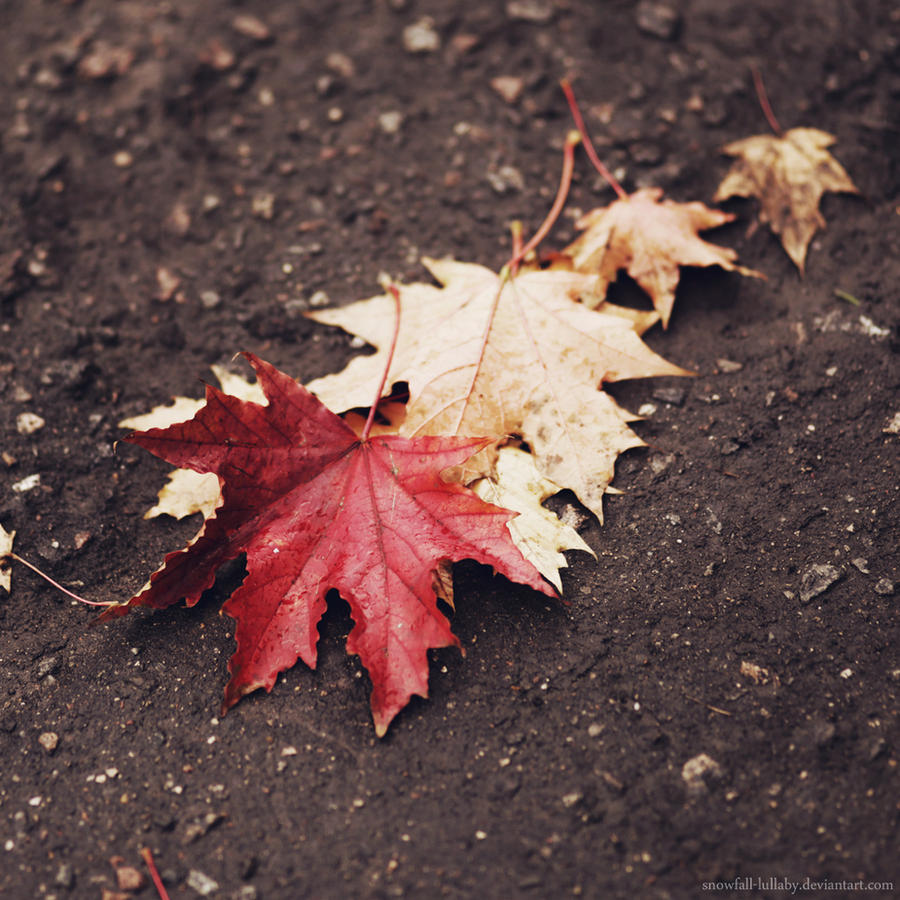 1 2 3 4... Autumn! by Snowfall-lullaby