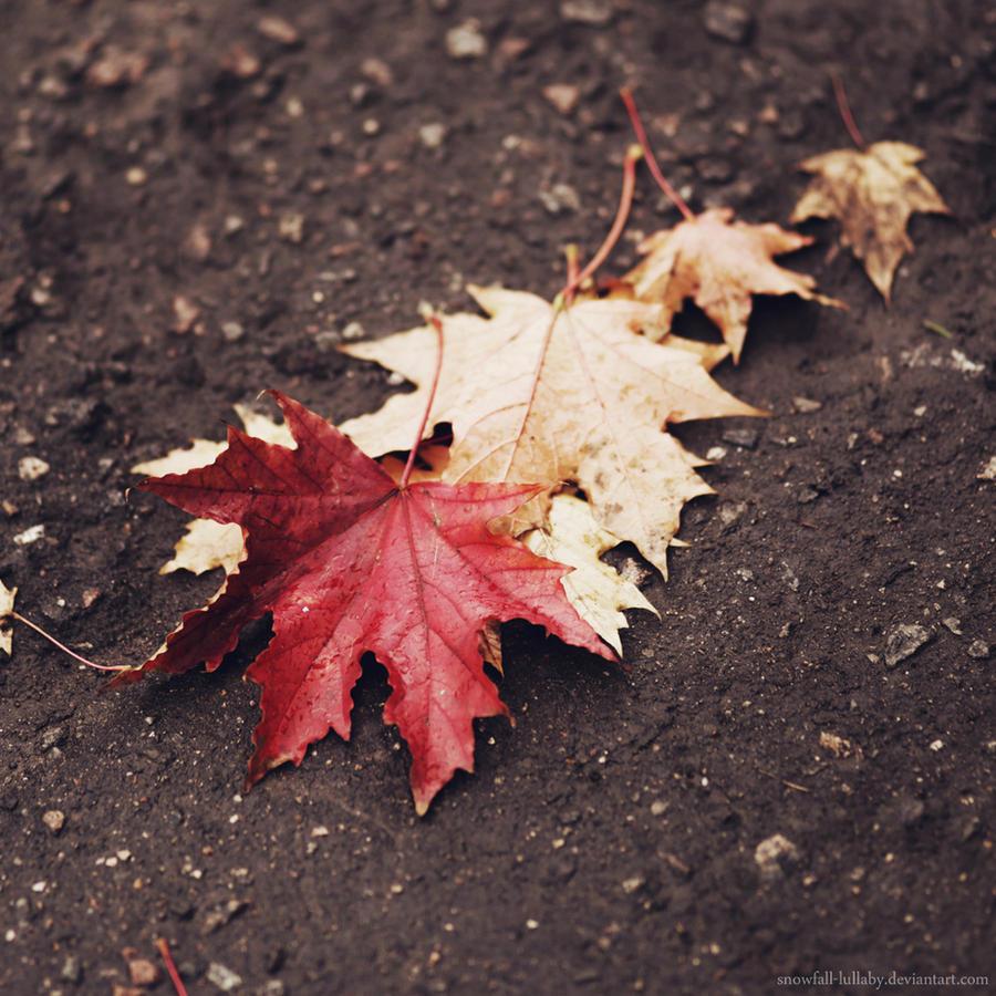 1 2 3 4... Autumn! by Snowfall-lullaby