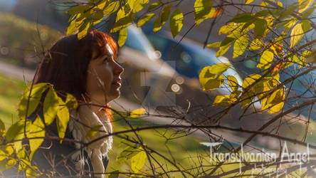 Autumn sun by Transylvanian-Angel