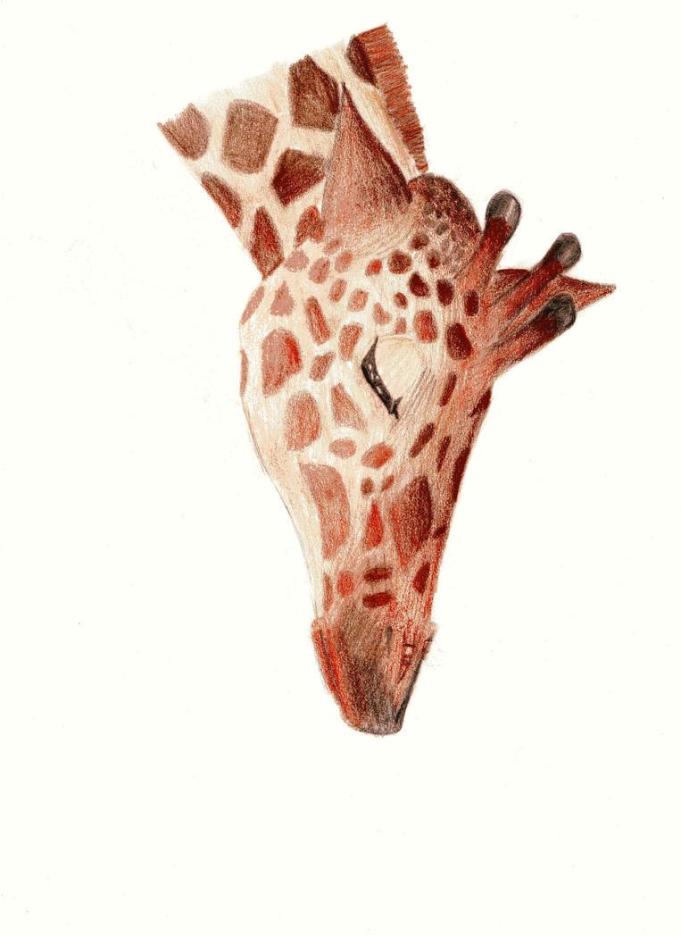 coloured giraffe by Nutriasobolowa