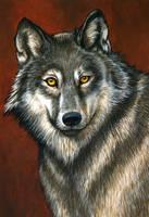 Wolf by ravenscar45