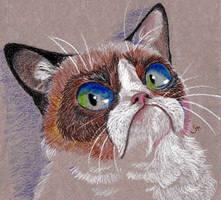 Grumpy Cat by saemful